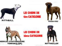 Déclaration de chiens dangereux