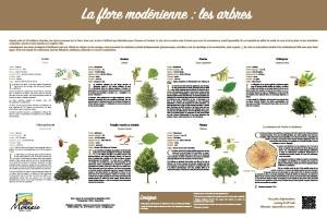 La flore modénienne : les arbres