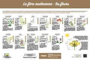 La flore modénienne : les fleurs