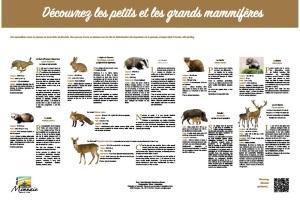 Découvrez les petits et les grands mammifères