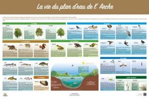 La vie du plan d'eau de l'Arche