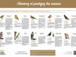 Observez et protégez les oiseaux